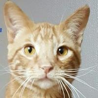 Adopt A Pet :: JAKE - Elk Grove Village, IL