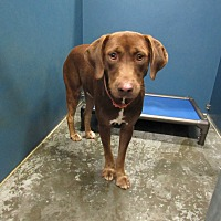 Adopt A Pet :: Smoke - Henderson, NC