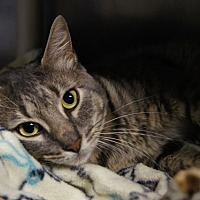 Adopt A Pet :: Charlie - New Milford, CT