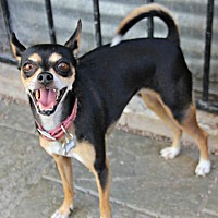 Adopt A Pet :: Chloe Jane - Phoenix, AZ