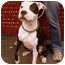 Photo 2 - American Staffordshire Terrier/Boxer Mix Dog for adoption in New York, New York - Mooch