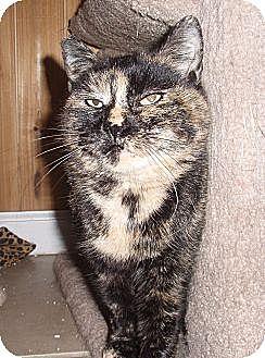 Domestic Shorthair Cat for adoption in Germansville, Pennsylvania - Karina