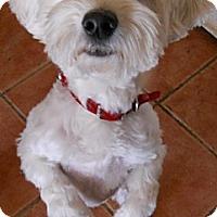 Adopt A Pet :: Snowball - dewey, AZ