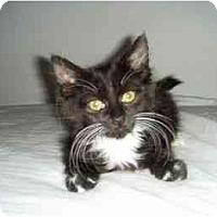 Adopt A Pet :: Peeps - Scottsdale, AZ
