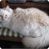 Adopt A Pet :: Tawney - Keizer, OR
