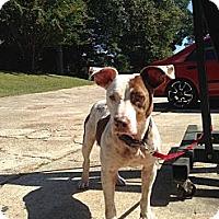 Adopt A Pet :: Carnation - Conyers, GA