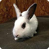 Adopt A Pet :: Madagascar - Lower Burrell, PA