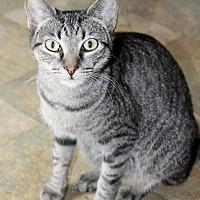 Adopt A Pet :: Tussie - Memphis, TN