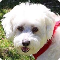 Adopt A Pet :: Jaxon - La Costa, CA