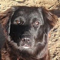 Adopt A Pet :: Cole - Cross Roads, TX