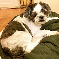 Adopt A Pet :: MaCkenzie - San Diego, CA