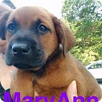 Adopt A Pet :: Mary Ann - Jackson, TN
