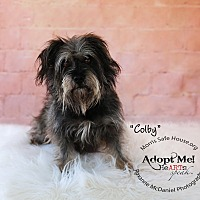 Adopt A Pet :: Colby - Lubbock, TX