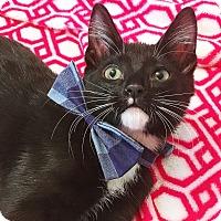 Adopt A Pet :: Crusher - Duluth, GA