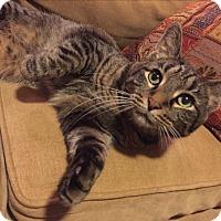 Adopt A Pet :: Baby Boy - Chicago, IL