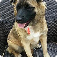 Adopt A Pet :: Sapphire *Multiple Applications* - Princeton, MN