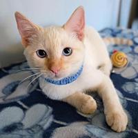 Adopt A Pet :: Frankie - Fullerton, CA