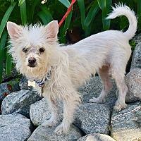 Adopt A Pet :: BAMBI - Van Nuys, CA