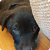 Adopt A Pet :: Punkin - Golden Valley, AZ