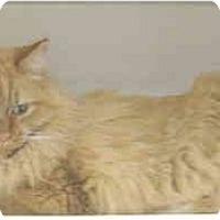 Adopt A Pet :: Nermal - Mesa, AZ