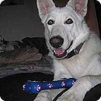 Adopt A Pet :: Casper - Green Cove Springs, FL