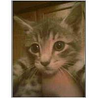 Adopt A Pet :: Misty - Owasso, OK