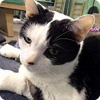 Adopt A Pet :: Moo - Raritan, NJ