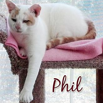 Domestic Shorthair Cat for adoption in Ashland, Massachusetts - The Fabulous Fifteen