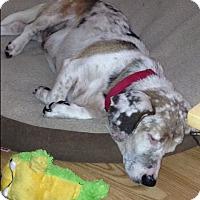 Adopt A Pet :: Oscar - Columbia, SC