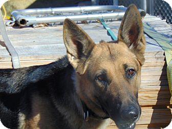 German Shepherd Dog Mix Dog for adoption in Portland, Maine - Farrah