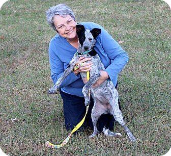 Australian Cattle Dog Mix Dog for adoption in Nesquehoning, Pennsylvania - Paisley