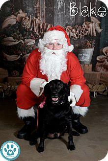 Labrador Retriever Mix Dog for adoption in Kimberton, Pennsylvania - Blake