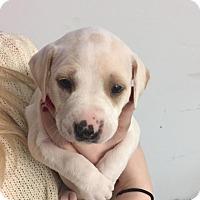 Adopt A Pet :: Mayflower - Burlington, NJ