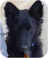 Border Collie Mix Dog for adoption in Carrollton, Texas - Brock