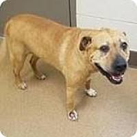 Adopt A Pet :: Foxy - Beverly Hills, CA