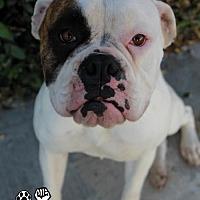 Adopt A Pet :: Sophie II - Huntington Beach, CA