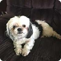 Adopt A Pet :: Zeva - Avon, NY