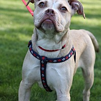 Adopt A Pet :: Guerro - Wethersfield, CT