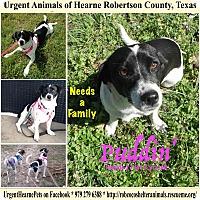 Adopt A Pet :: Puddin - Hearne, TX