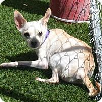 Adopt A Pet :: Sarah - Meridian, ID