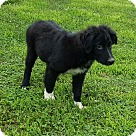 Adopt A Pet :: Seymour - Niagra Falls, NY