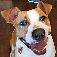 Adopt A Pet :: Cole - Clarksville, TN
