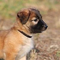 Adopt A Pet :: Korbyn - San Diego, CA