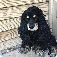 Adopt A Pet :: Bailey - Capistrano Beach, CA