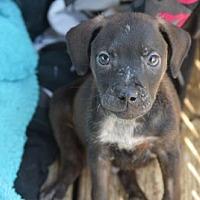 Adopt A Pet :: Biff - Fairmont, WV
