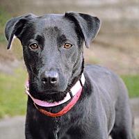 Adopt A Pet :: Cammi - Marietta, GA