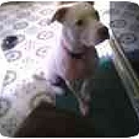 Adopt A Pet :: Mystic - URGENT! - Alliance, OH
