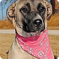 Adopt A Pet :: Yvonne - Gonzales, TX