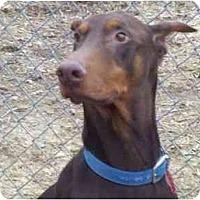 Adopt A Pet :: Trevor--adopted!! - New Richmond, OH