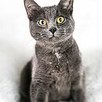 Adopt A Pet :: Penny - Eagan, MN